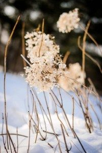 rustic winter shoot with woodsman details - natural decor