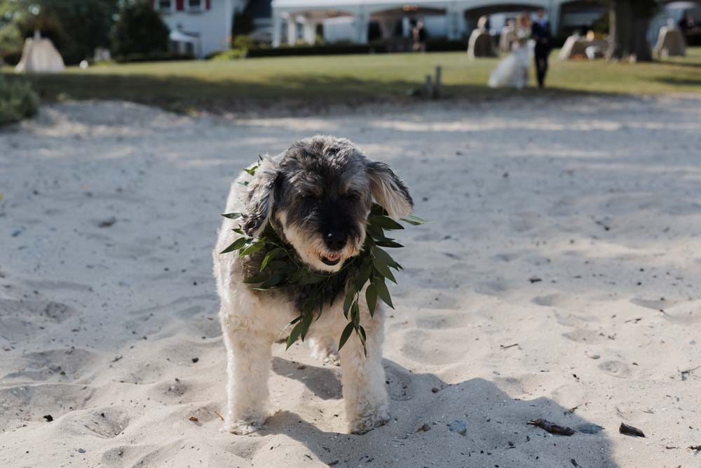 A Whimsical Wedding at Windmill Point, Ontario - Dog